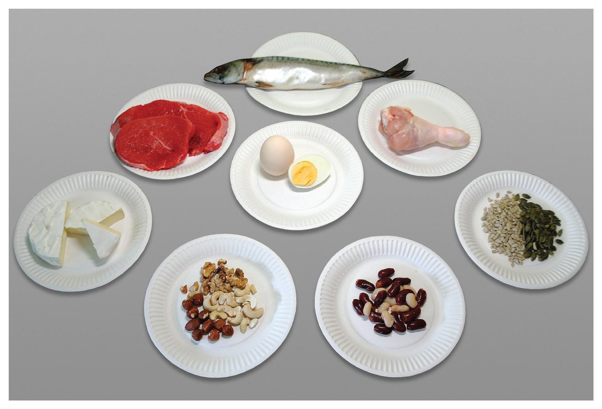 Fotografia przedstawia osiem białych talerzyków zproduktami, bogatymi wbiałko. Od góry: srebrzysta ryba. Niżej czerwone płaty surowego mięsa. Wśrodku dwa jajka, jedno ugotowane przekrojone dla ukazania żółtka. Zprawej różowe surowe udko drobiowe. Wdolnym rzędzie od lewej: kawałki biało – kremowego sera pleśniowego, różne brązowe ijasne orzechy. Biała iczerwona fasola, na końcu ziarna słonecznika izielone dyni.
