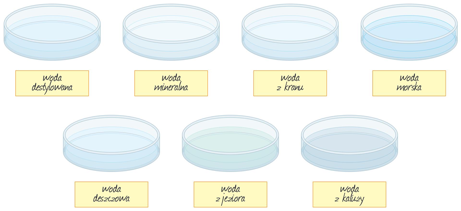 Ilustracja przedstawia zebrane wjednym miejscu składniki do doświadczenia. Zestaw składa się zsiedmiu szklanych płaskich naczyń laboratoryjnych, czyli szalek Petriego. Wkażdej znajduje się taka sama ilość wody ikażda ma poniżej etykietkę zpodpisem. Niektóre zawartości odznaczają się nieco odmienną barwą, niż reszta. Licząc od lewej strony wgórnym rzędzie znajdują się: woda destylowana, woda mineralna, woda zkranu inieco ciemniejsza od pozostałych woda morska. Wdolnym rzędzie próbki to: woda deszczowa, woda zjeziora onieco zielonkawym zabarwieniu imętna woda zkałuży.