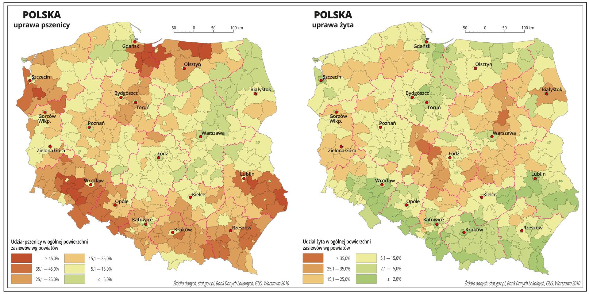 Ilustracja przedstawia dwie mapy Polski, na których pokazano udział pszenicy iżyta wogólnej powierzchni zasiewów według powiatów. Na mapie czerwonymi liniami oznaczono granice województw, aczarnymi granice powiatów, czerwonymi kropkami oznaczono miasta wojewódzkie ije opisano. Uprawa pszenicy. Kolorem czerwonym oznaczono obszary, wktórych uprawa pszenicy przekracza czterdzieści pięć procent ogólnej powierzchni zasiewów. Obejmują one powiaty wwojewództwie dolnośląskim, lubelskim, pomorskim iwarmińsko-mazurskim. Bezpośrednio do tych powiatów przylegają obszary orównie dużym odsetku pszenicy wogólnej powierzchni zasiewów, wynoszącym powyżej dwudziestu pięciu procent. Kolorem żółtym oznaczono obszary, na których udział pszenicy wogólnej powierzchni zasiewów wynosi od pięciu do piętnastu procent iobejmuje on przeważającą część mapy – centralną Polskę. Kolorem zielonym oznaczono obszary, na których uprawa pszenicy nie przekracza pięciu procent ogólnej powierzchni zasiewów iwystępują one wwojewództwie mazowieckim, podlaskim ipomorskim. Poniżej mapy opisano kolory użyte na mapie. Uprawa żyta. Odcieniami koloru zielonego iżółtego oznaczono obszary, wktórych udział żyta wogólnej powierzchni zasiewów wynosi poniżej piętnastu procent. Obejmują one większą powierzchnię mapy. Najniższe wartości są na południu Polski, wwojewództwie dolnośląskim, na obszarach górskich, na Wyżynie Lubelskiej oraz wwojewództwie kujawsko-pomorskim, pomorskim iwarmińsko-mazurskim. Powiaty wktórych udział żyta wogólnej powierzchni zasiewów przekracza piętnaście procent oznaczono odcieniami koloru pomarańczowego iwystępują one wwojewództwach łódzkim, mazowieckim, podlaskim, lubuskim, zachodniopomorskim ipomorskim. Poniżej mapy opisano kolory użyte na mapie.