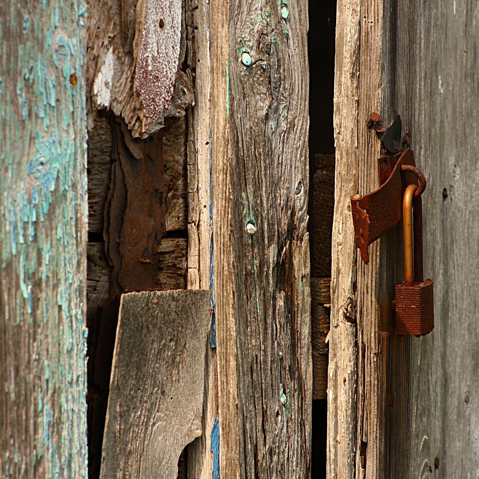 Fotografia przedstawia ustawione pionowo kawałki chropowatego, butwiejącegio drewna.