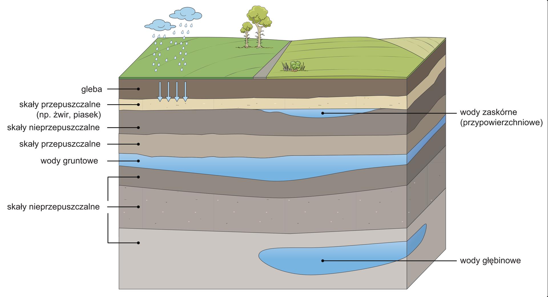 Na ilustracji prostopadłościan zbrązowymi warstwami skał poprzedzielanymi warstwami wody. Na wierzchu trawa idrzewa. Zchmur powyżej powierzchni trawy pada deszcz. Zlewej strony ilustracji opisano rodzaje skał iwód przedstawionych na schemacie. Są to naprzemiennie skały przepuszczalne inieprzepuszczalne. Pomiędzy nimi wody: zaskórne (przypowierzchniowe), gruntowe igłębinowe.