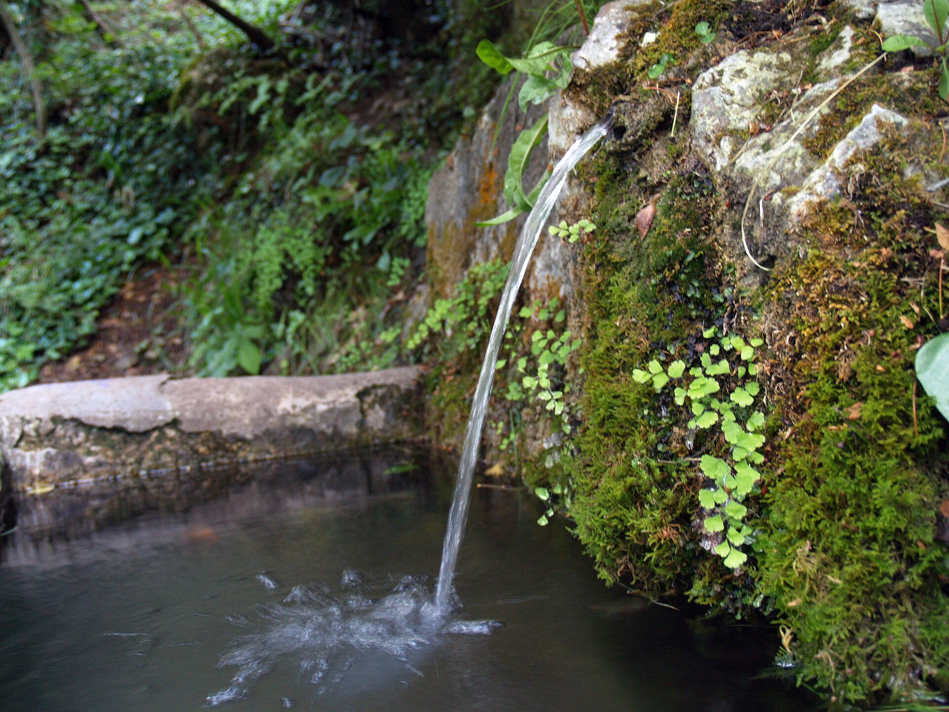 Zdjęcie tryskającego ze skał źródła wody. Wtle izprawej strony ściana skalna porośnięta mchem ipaprociami. Woda tryska do niewielkiego zbiornika na pierwszym planie.