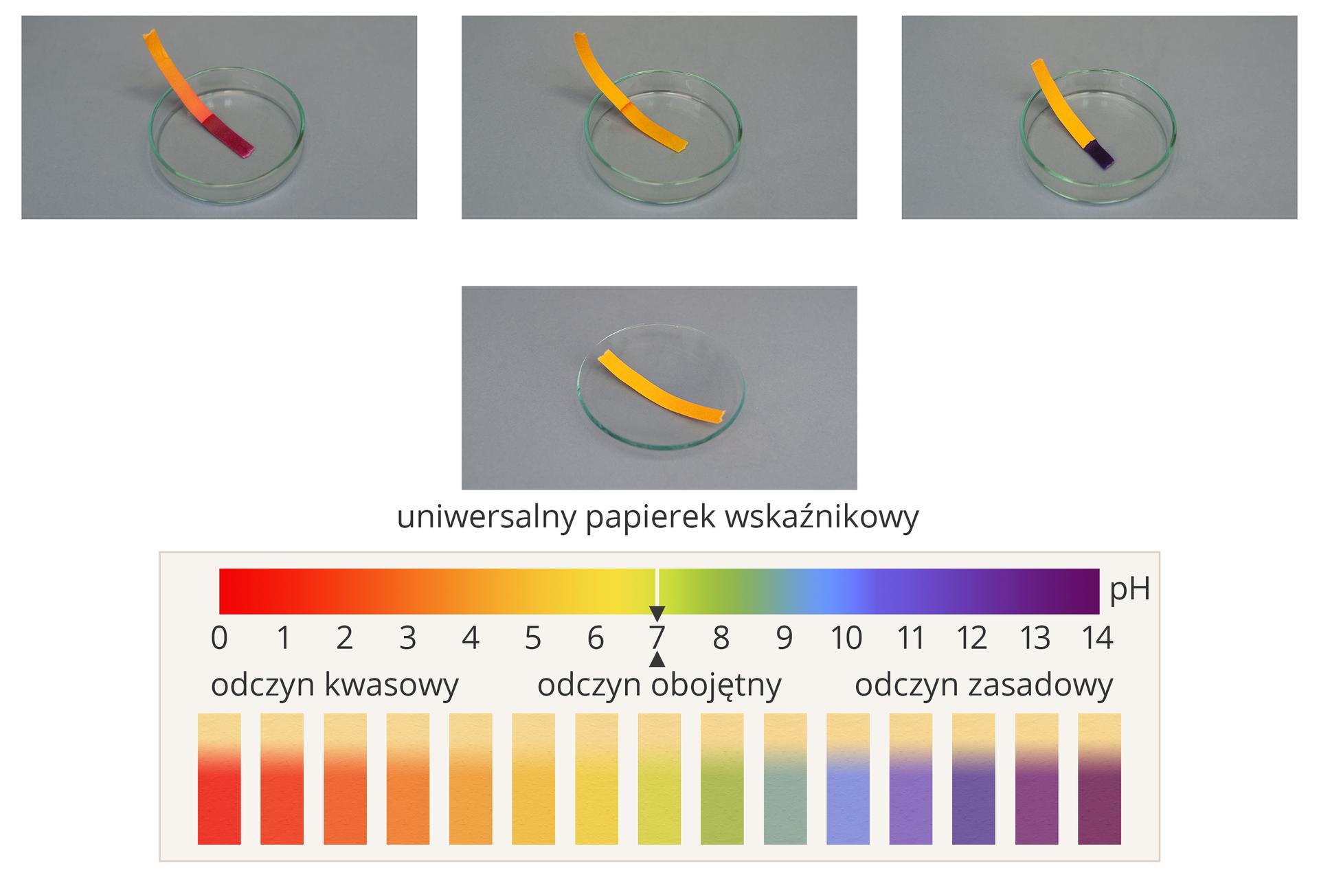 Ilustracja przedstawia zachowanie uniwersalnych papierków wskaźnikowych wroztworach oróżnym odczycie. Wśrodkowej części obrazka znajduje się podpisane zdjęcie nieużywanego uniwersalnego papierka wskaźnikowego leżącego na szkiełku zegarkowym. Papierek ma kolor żółtopomarańczowy. Powyżej wjednym szeregu umieszczono trzy zdjęcia przedstawiające papierki włożone do roztworów znajdujących się wszklanych szalkach Petriego. Roztwór zlewej strony ma odczyn mocno kwasowy, część zanurzona papierka przybrała barwę wiśniową. Roztwór na zdjęciu centralnym jest neutralny, ponieważ papierek jest wilgotny, ale praktycznie nie zmienił koloru. Roztwór po prawej stronie jest mocno zasadowy, ponieważ mokra część papierka ma kolor granatowy. Wdolnej części ilustracji znajduje się skala kwasowości wraz zkodem barwnym papierków wskaźnikowych, jakie papierki te przybierają wśrodowiskach oróżnym odczynie. Kolorystyka ta zmienia się od barwy czerwonej dla niskich wartości pH, przez pomarańczową, żółtą, zieloną, niebieską, fioletową, aż do ciemnofioletowej. dla pH wysokich.