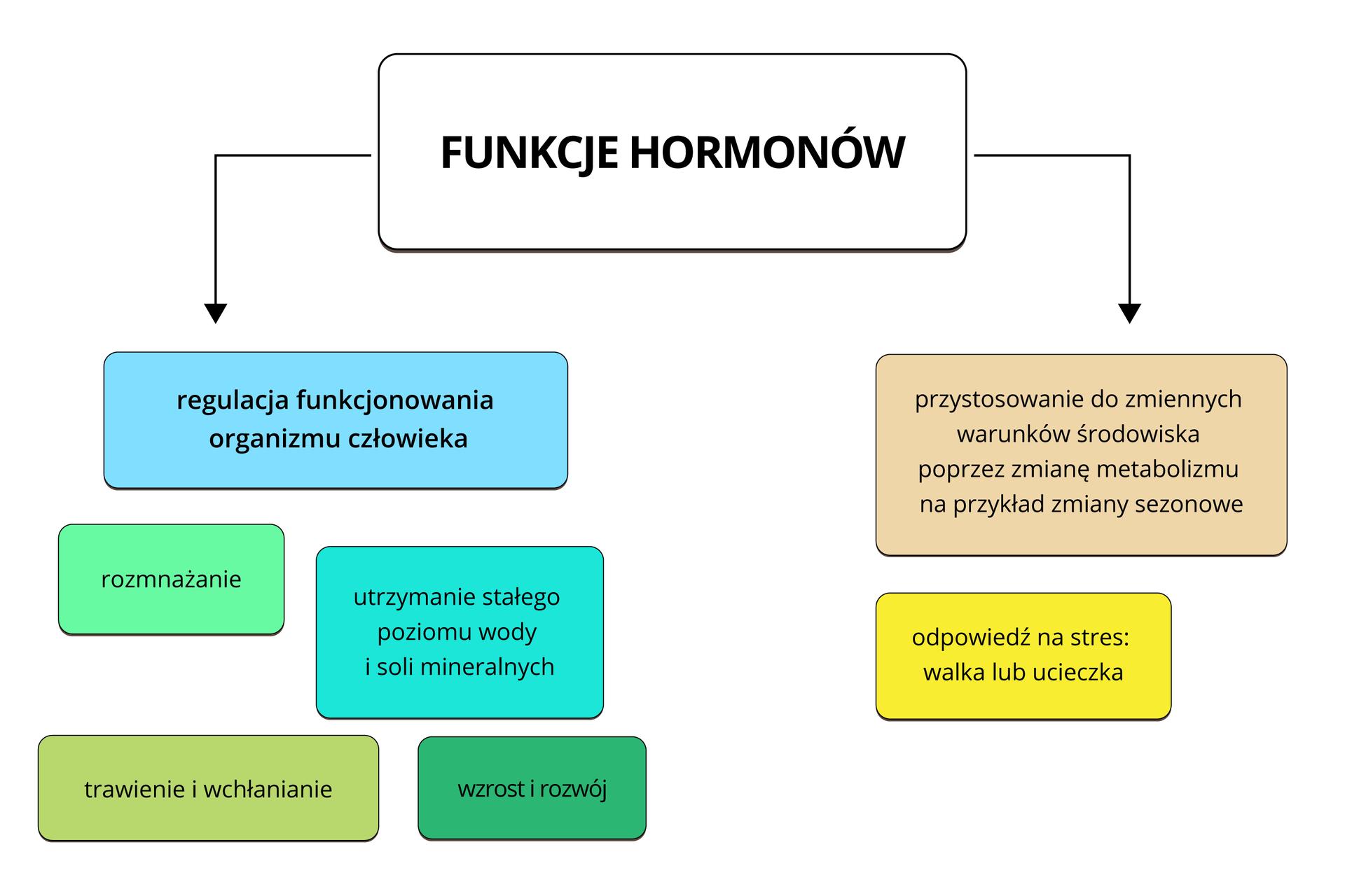 Ilustracja przedstawia schemat blokowy. Wkolorowych prostokątach opisano funkcje hormonów. Informuje otym biały prostokąt na samej górze. Po lewej strzałka wdół prowadzi do turkusowego prostokąta, regulacji funkcjonowania organizmu człowieka. Hormony za to odpowiedzialne działają na: rozmnażanie (mały, niebieskozielony prostokąt), utrzymanie stałego poziomu wody isoli mineralnych (błękitny prostokąt), trawienie iwchłanianie (oliwkowy prostokąt), wzrost irozwój (zielononiebieski prostokąt). Po prawej strzałka wdół prowadzi do: procesów adaptacyjnych (pomarańczowy prostokąt), odpowiedzi na stres: walka lub ucieczka (żółty prostokąt), przystosowania do zmiennych warunków środowiska poprzez regulację metabolizmu, na przykład zmiany sezonowe (różowy prostokąt).