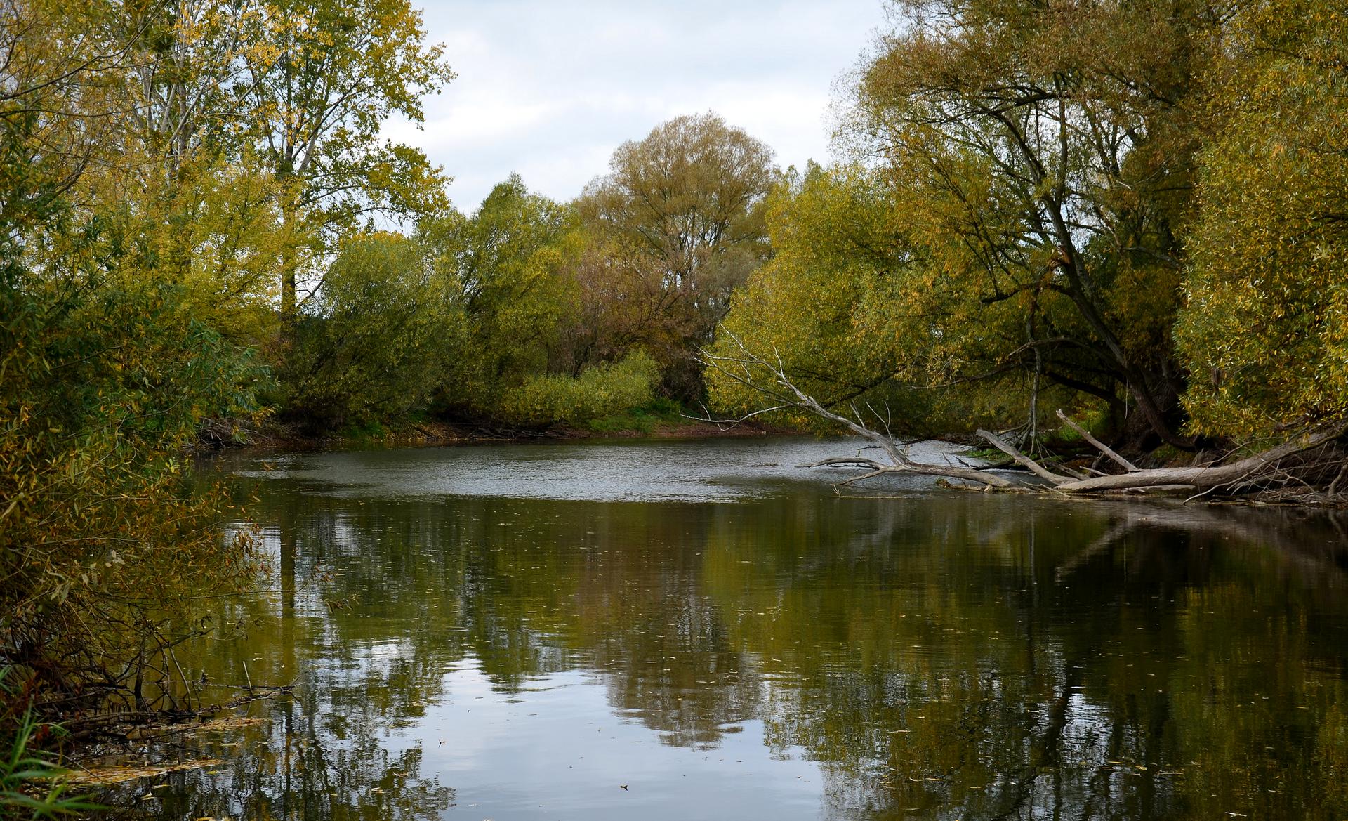 Fotografia przedstawia szeroko płynącą rzekę. Jej brzegi są porośnięte drzewami, odbijającymi się wwodzie. To rezerwat wodny Rzeka Drwęca wwojewództwie warmińsko – mazurskim. Jest miejscem ochrony rzadkich gatunków ryb.