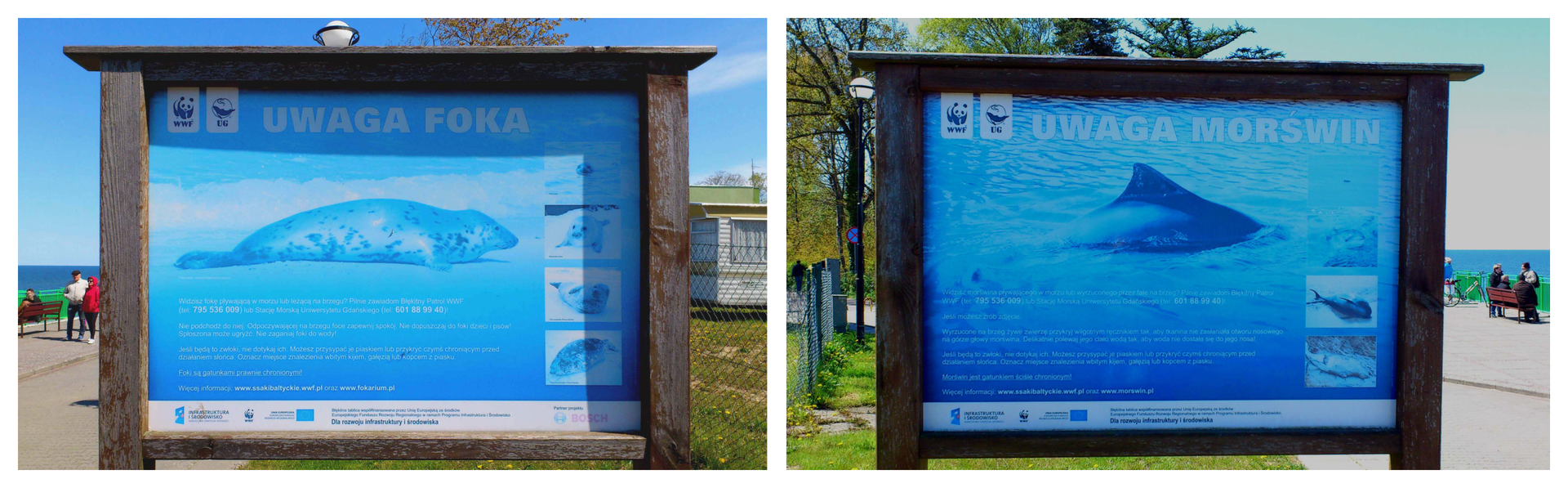 Na zdjęciu tablice ze zdjęciami foki imorświna iopisami. Tablice stoją przy plaży.