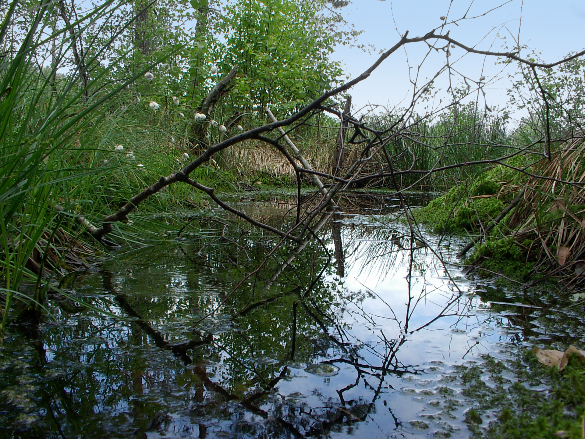 Fotografia przedstawia zalany wodą obszar. Zwisa nad nim uschnięta gałąź. Przy wodzie rosną drzewa igęsta roślinność przybrzeżna. To rezerwat Torfowisko Rąbień wwojewództwie łódzkim.
