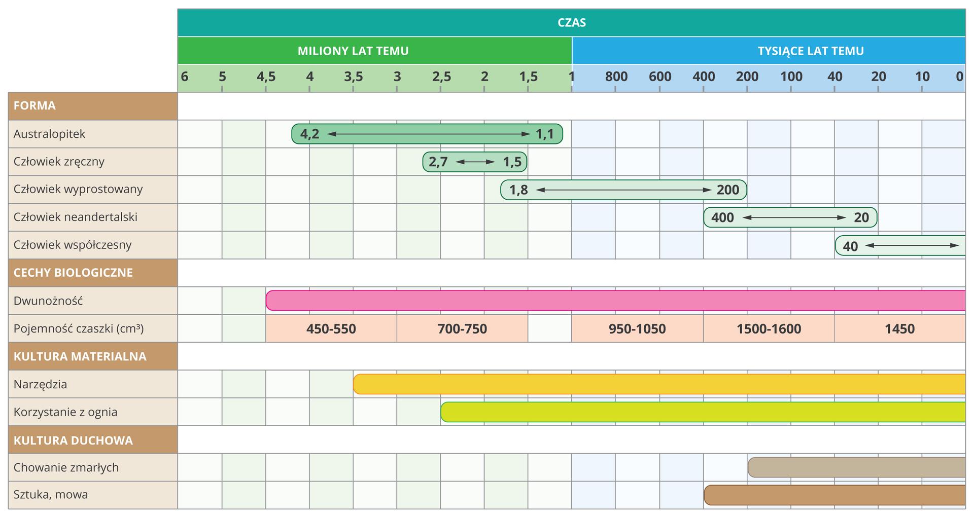 Schemat wformie tabeli ibloków przedstawia porównanie australopiteka iwybranych gatunków człowieka. Ugóry tabeli znajduje się turkusowa linia czasu. Część zielona zlewej to skala milionów, aniebieska zprawej tysięcy lat wstecz. Wkolumnie zlewej opisano: formy ludzkie, cechy biologiczne, kulturę materialną ikulturę duchową. Wpierwszym wierszu blok zielony wskazuje czas występowania australopiteka: od 4,2 do 1,1 miliona lat temu. Człowiek zręczny żył od 2,7 do 1,5 miliona lat wstecz. Człowiek wyprostowany żył od 1,8 miliona do 400 tysięcy lat temu. Człowiek neandertalski od 400 do 20 tysięcy lat temu. Człowiek współczesny od 30 tysięcy lat wstecz do teraz. Dwunożność pojawiła się 4,5 miliona lat temu. Pojemność czaszki zwiększała się wtym czasie od 450 do 1450cm sześciennych. Narzędzia zaczęły być używane 3,5 miliona lat temu, aognia ludzie używali od 2,5 miliona lat wstecz. Sztuka imowa pojawiły się 400 tysięcy lat temu, azwyczaj chowania zmarłych 200 tysięcy lat temu.