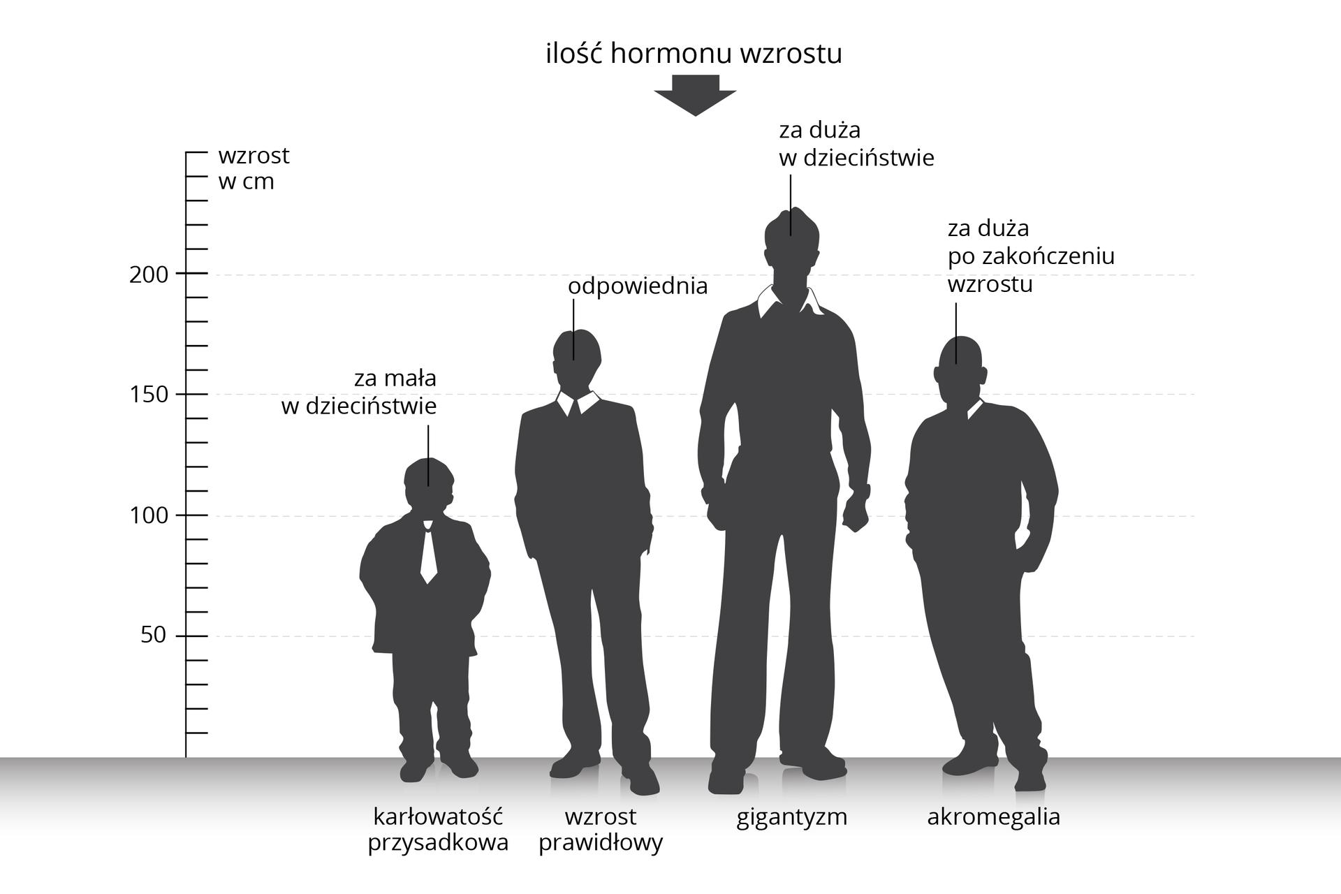 Ilustracja przedstawia porównanie proporcji sylwetki ludzkiej pod wpływem hormonu wzrostu. Na osi Xstoją cztery szare postacie mężczyzn. Na osi Yzaznaczono podziałkę wzrostu wcentymetrach. Pierwsza postać jest niska. Za mała ilość hormonu wzrostu wdzieciństwie spowodowała karłowatość przysadkowatą. Drugi od lewej to mężczyzna oprawidłowym wzroście. Ilość hormonu wokresie wzrostu była odpowiednia. Trzeci mężczyzna, najwyższy znich, poddany został wdzieciństwie działaniu za dużej ilości hormonu wzrostu. Cierpi na gigantyzm. Uostatniej zsylwetek wystąpiła akromegalia, gdy uosób dorosłych po zakończeniu wzrostu jest zbyt duża ilość hormonu wzrostu.
