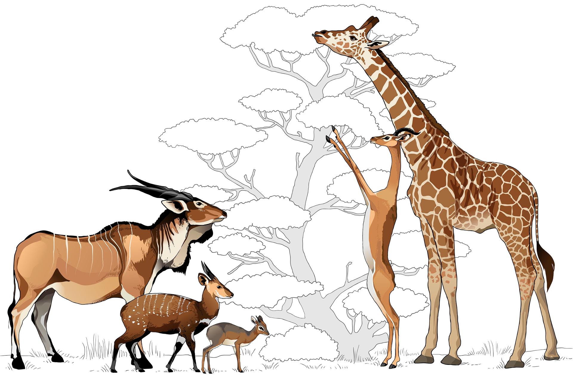 Ilustracja przedstawia zwierzęta, stojące zobu stron schematycznego drzewa wszarym kolorze. Zwierzęta mają różną wielkość, dlatego mogą wykorzystywać inne partie rośliny.