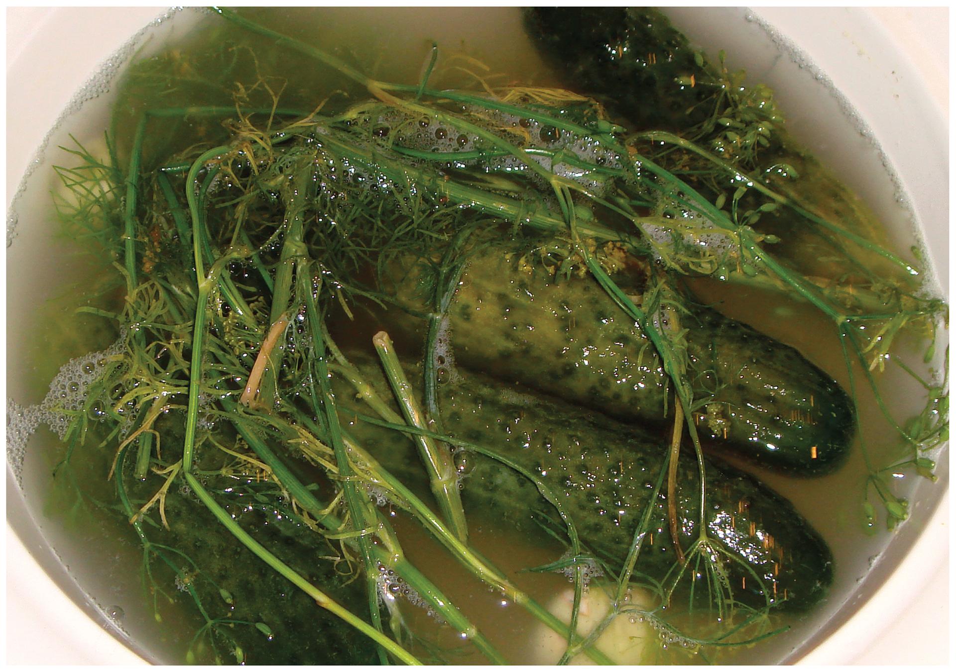 Fotografia przedstawia dwa ogórki kiszone wnaczyniu, okryte częściowo przykryte gałązkami kopru. Jest to ilustracja znaczenia bakterii wprzemyśle spożywczym do prowadzenia fermentacji.