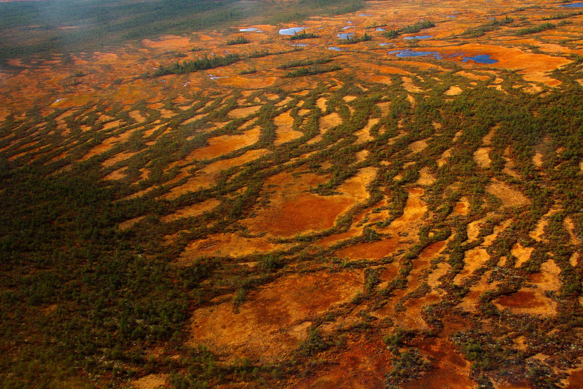 Fotografia lotnicza przedstawia ciemnozielone, rude, żółte iniebieski plamy. To krajobraz torfowiska wtajdze.
