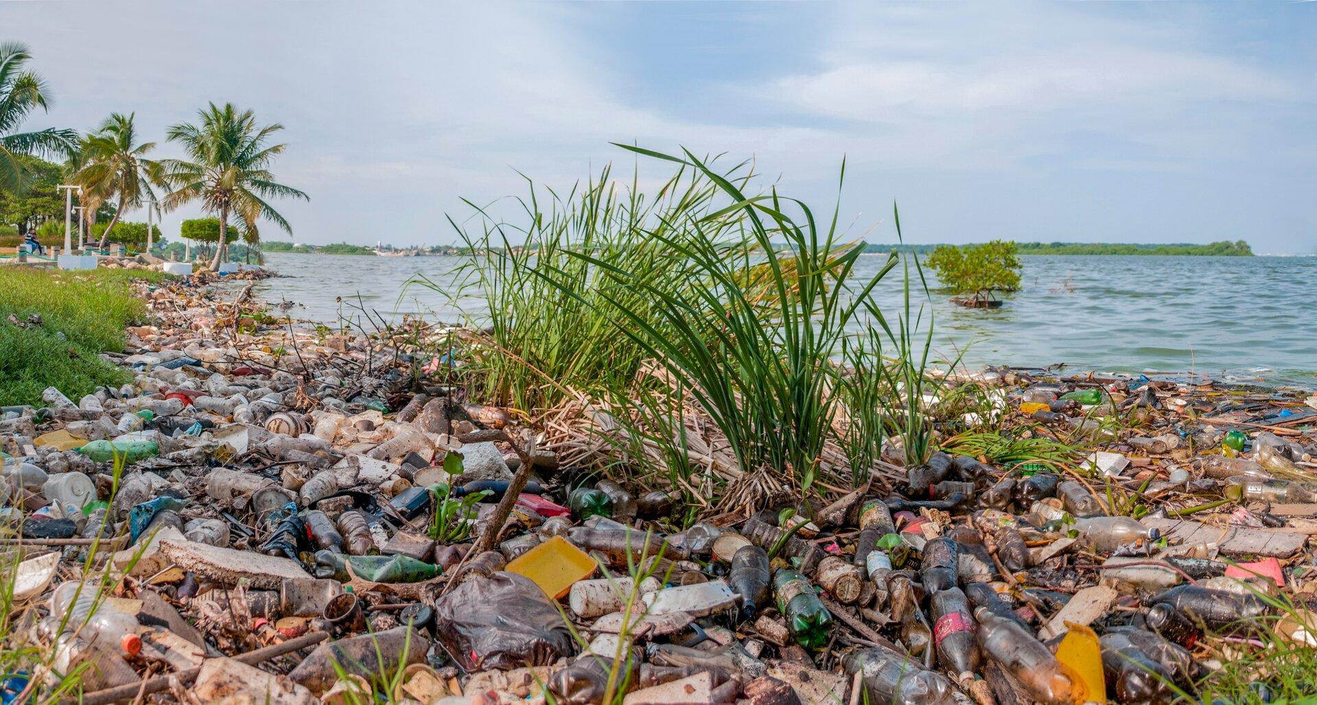 Zdjęcie zanieczyszczonego odpadami brzegu jeziora. Głównie plastikowe butelki. Wtle pojedyncze palmy na brzegu jeziora. Na drugim planie odległy brzeg jeziora porośnięty lasem.