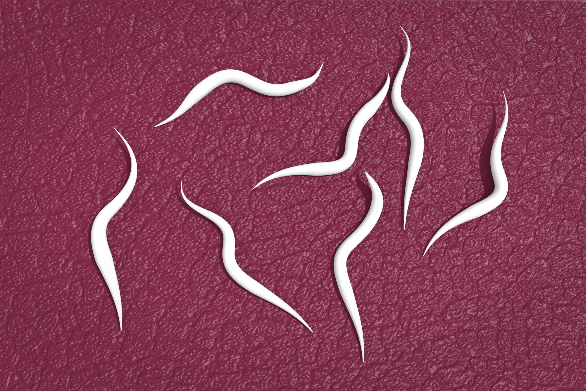 5 – owsiki, niewielkich rozmiarów białe nicienie