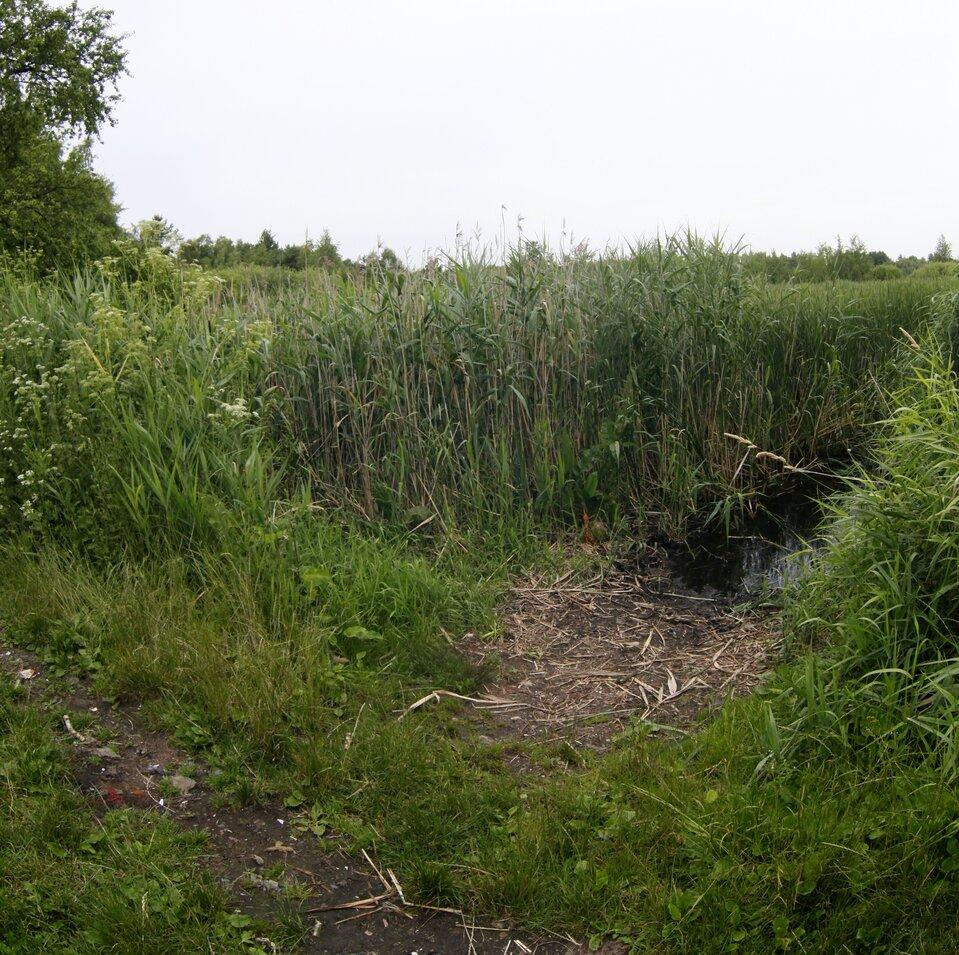 Rezerwat Torfowisko Rąbień panorama interaktywna