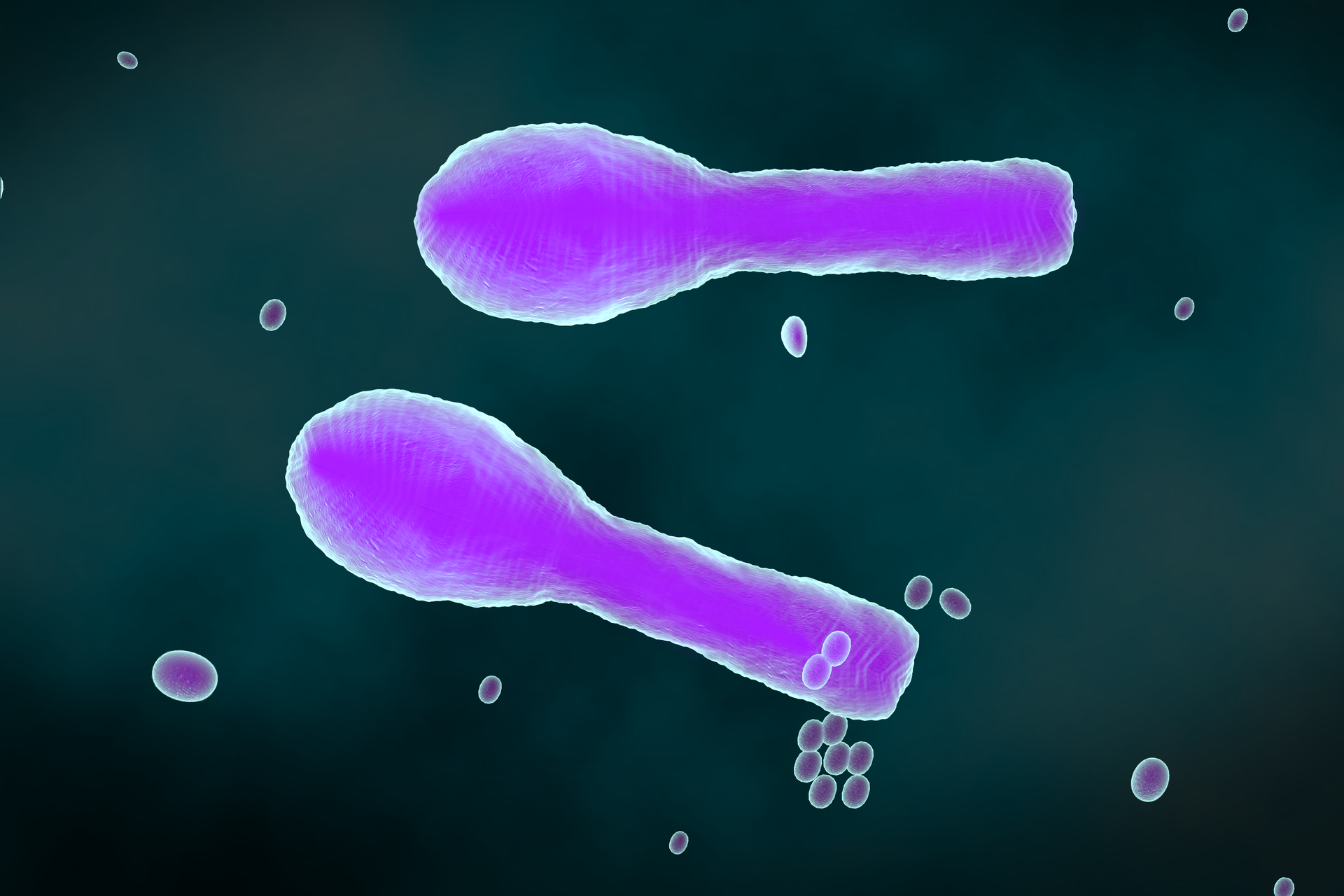 Ilustracja przedstawia na czarnym tle dwie duże, fioletowe, maczugowate bakterie ikilka mniejszych owalnych. Duże bakterie to laseczki tężca, azgrubienie na końcu to ich przetrwalnik.