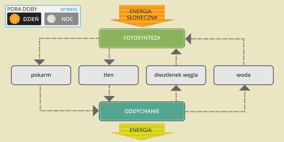 Film przedstawia współzależność pomiędzy fotosyntezą aoddychaniem. Duża pomarańczowa strzałka ugóry symbolizuje energię słoneczną, która jest potrzebna do fotosyntezy, symbol: zielony czworokąt. Poniżej znajdują się cztery szare czworokąty znapisami: pokarm, tlen, dwutlenek węgla, woda. Od niebieskiego czworokąta, symbolu oddychania, wdół odchodzi duża żółta strzałka znapisem: energia. Pomiędzy czworokątami poruszają się strzałki, ukazujące zależności między nimi.