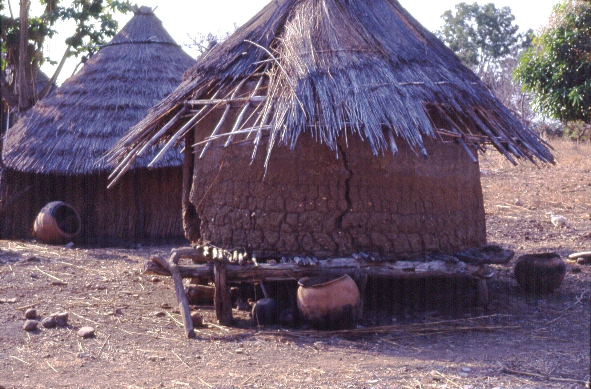 Lepianka afrykańska