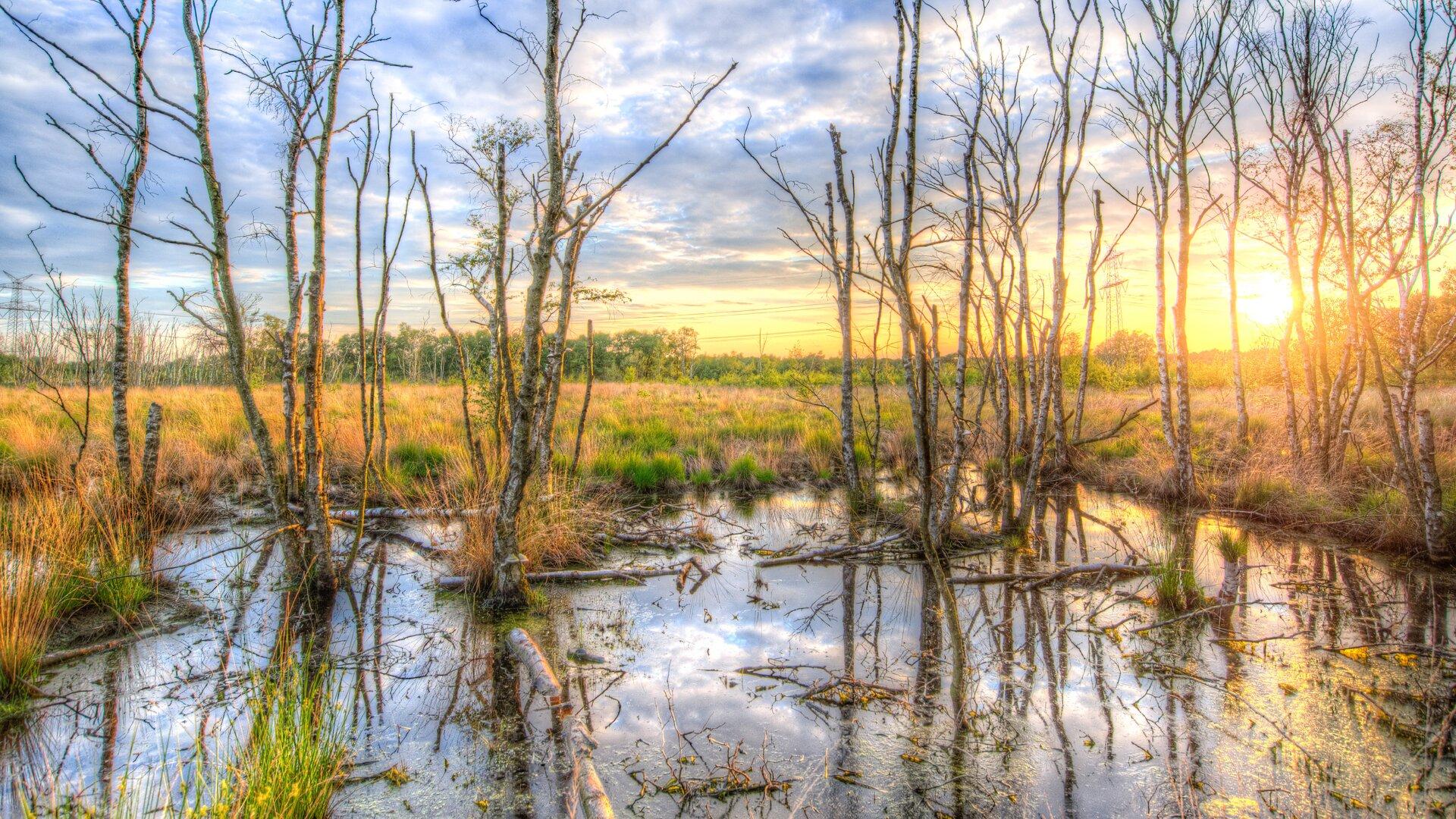 Ilustracja przedstawia słodkowodne bagno zdrzewami iinną roślinnością. Zbiornik jest dobrze oświetlony przez promienie padającego słońca. Woddali widać pola ilasy oraz zachodzące słońce.