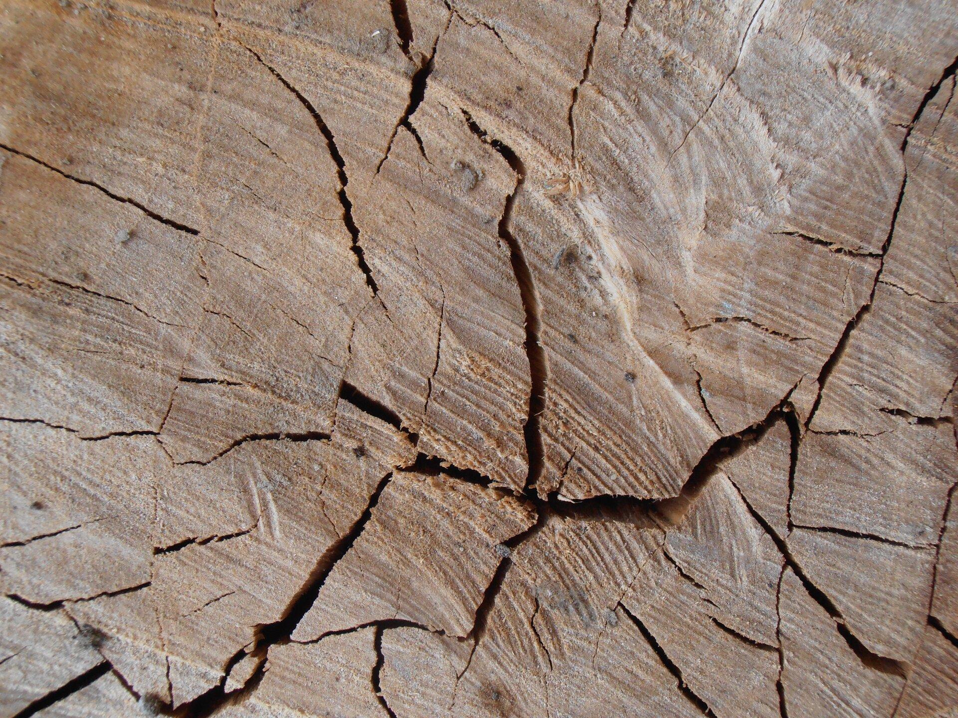 Pęcznienie drewna