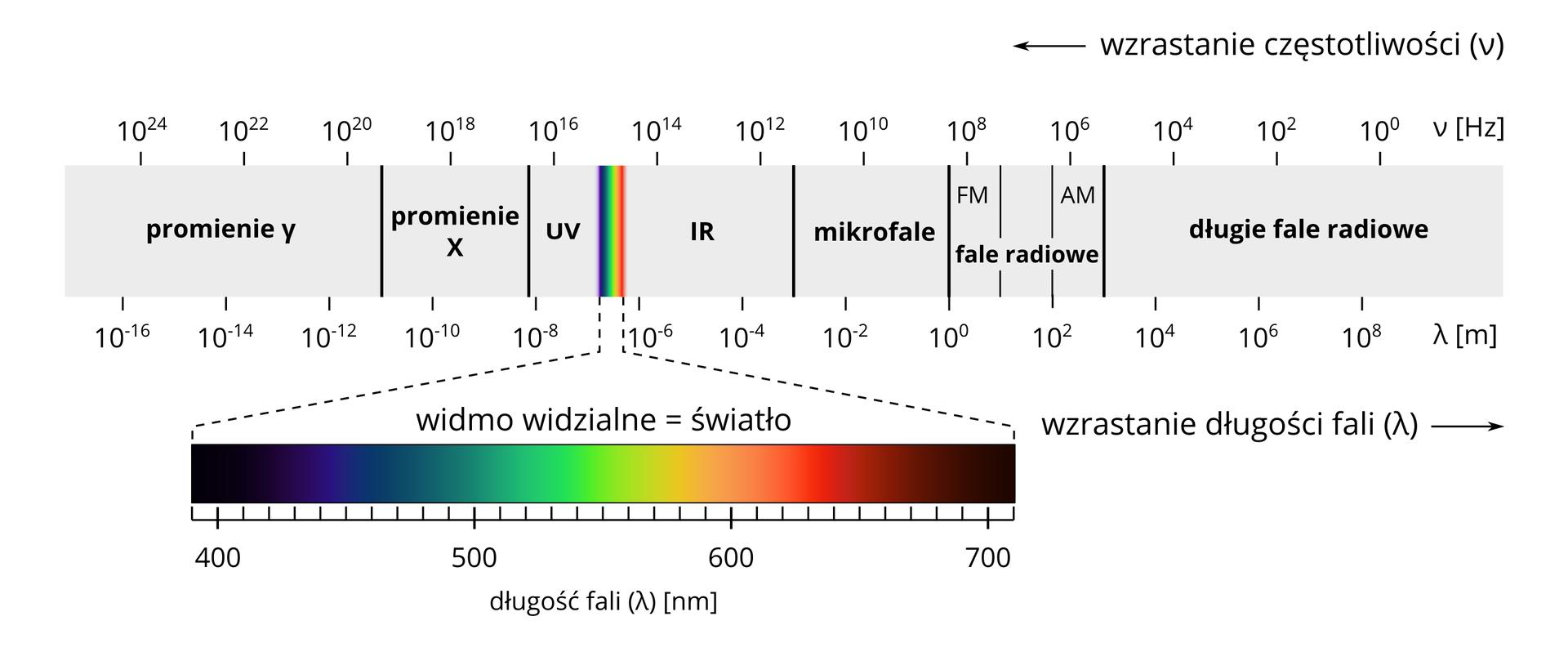 """Ilustracja przedstawia widmo światła widzialnego. Poziomo ułożony pas to widmo …Prostokąt podzielony jest podziałką liczbową. Wzdłuż górnej krawędzi liczby związane zczęstotliwością wHertzach. Początek skali po prawej stronie to dziesięć do zera. Skala zmienia odpowiednio wartości idąc wlewo. Strzałka wskazuje kierunek wlewo. Napis obok: wzrastanie częstotliwości. Następna liczba to dziesięć do drugiej, dziesięć do czwartej. Na końcu skali częstotliwość wynosi dziesięć do dwudziestej czwartej. Dolna krawędź prostokąta to skala wzrastania długości fali. Skala wyrażona wpromieniach gamma. Strzałka poniżej skierowana wprawo. Napis obok: wzrastanie długości. Na początku skali, po prawej, wartość to dziesięć do ósmej. Skala maleje przesuwając się wlewo. Następna liczba to dziesięć do szóstej. Wpołowie skali rozpoczynają się wartości ujemne. Powierzchnia prostokąta podzielono odpowiednio na różne rodzaje fal. Długie fale radiowe na prawej stronie fali. Kończą się za częstotliwością dziesięć do czwartej. Fale radiowe AM iFM kończą się zaraz za częstotliwością dziesięć do ósmej. Mikrofale sięgają do dziesięć do jedenastej. Fale IR występują do częstotliwości dziesięć do piętnastej. Po tej wartości kolorowe pionowe pasy tworzą widmo widzialne światła. Długość fali widma to poziomy długi prostokąt. Powierzchnia widma pokryta jest tęczowymi barwami. Lewy koniec widma to kolor czarny. Długość fali czterysta Nano.. Na prawo czarny płynnie przechodzi wgranatowy, turkusowy izielony. Długość fali pięćset. Następne kolory to biały, żółty ipomarańczowy. Długość fali to sześćset. Prawy koniec widma to odpowiednio kolor czerwony, brązowy iczarny. Na prawym końcu długość fali to siedemset. Za widmem światła znajdują się promienie uv. Za częstotliwością dziesięć do siedemnastej występują promienie """"iks"""". Na końcu występują promienie """"gamma""""."""