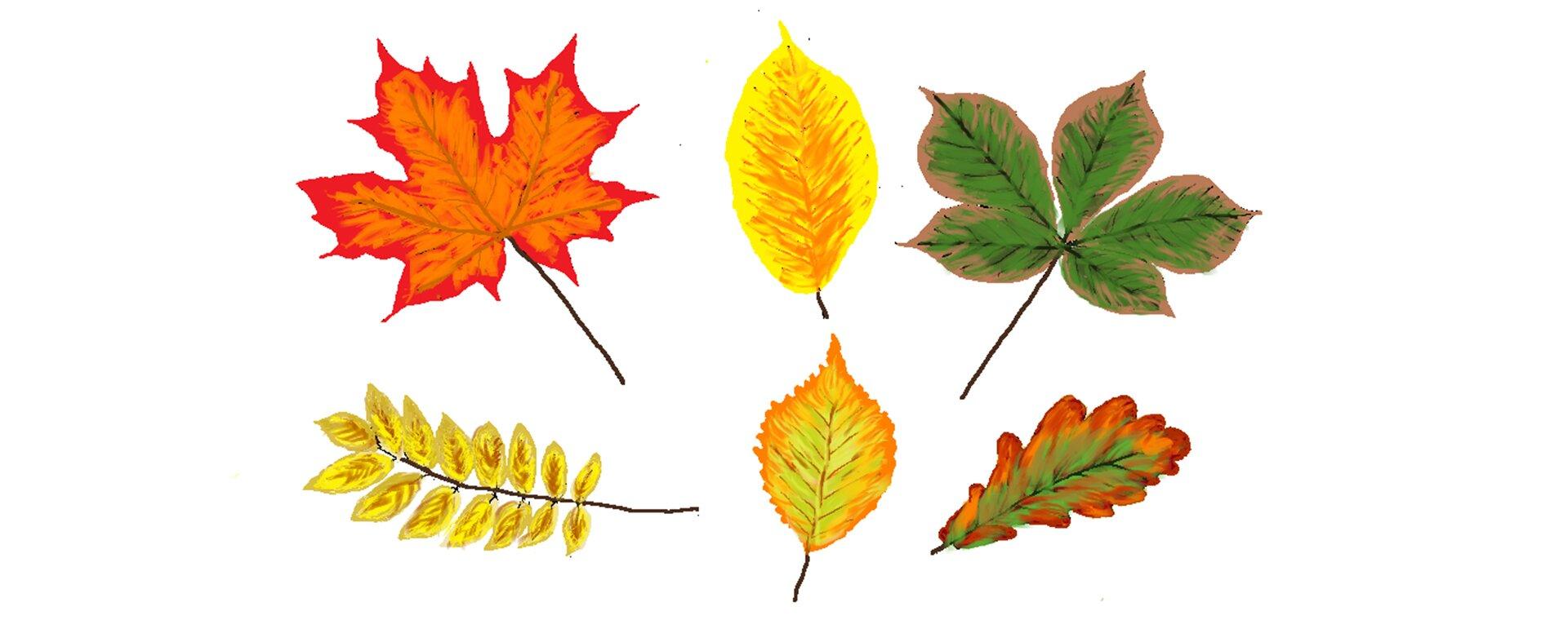 Ilustracja przedstawiająca liście wypełnione pędzlem