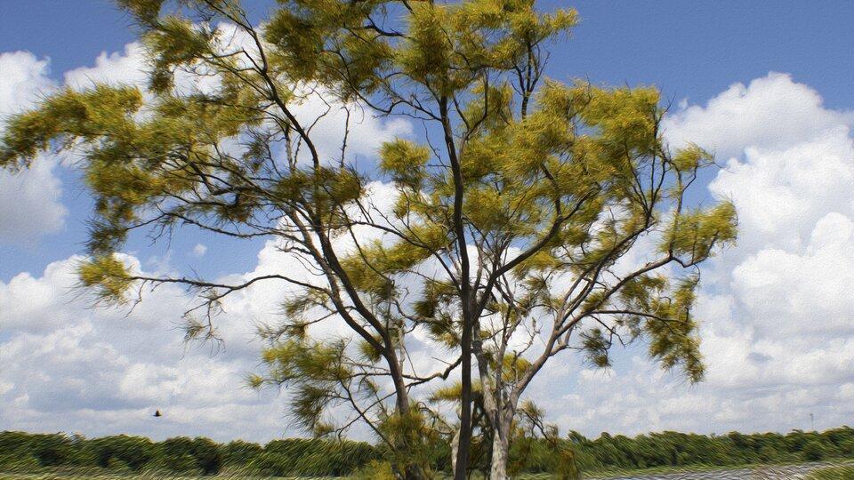 Ilustracja przedstawia drzewo zpowiewającymi gałęziami.