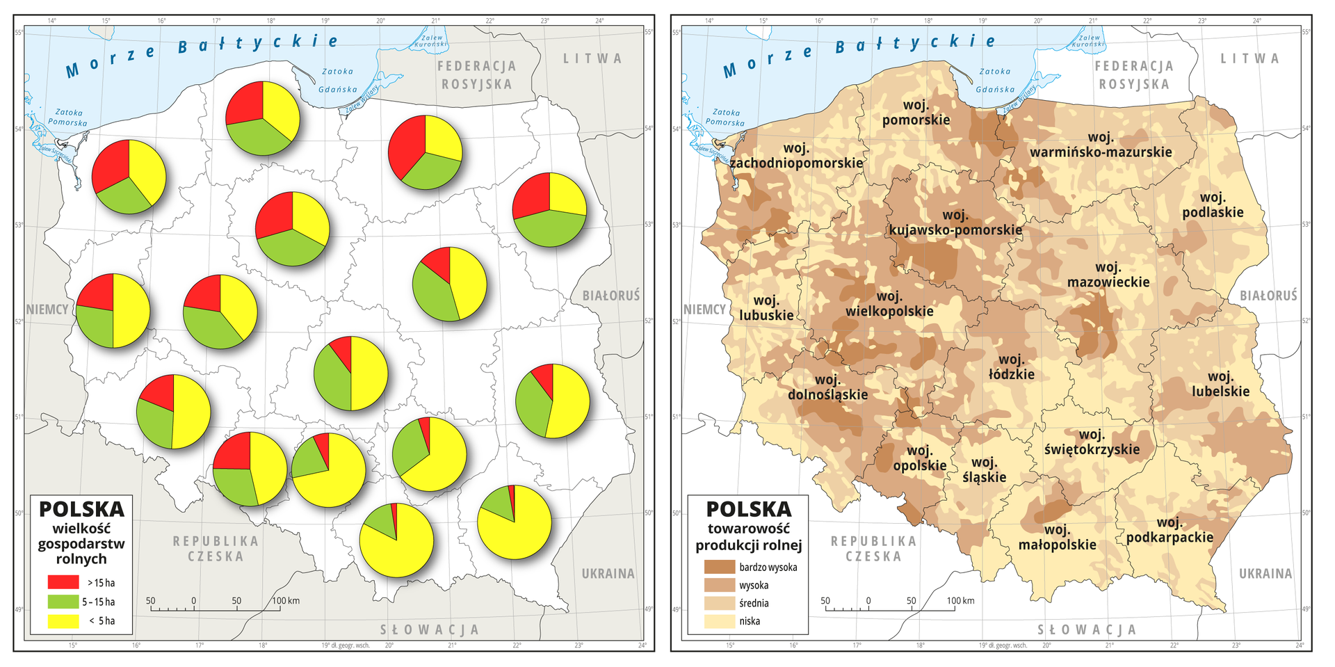Ilustracja przedstawia dwie mapy Polski zpodziałem na województwa. Na pierwszej diagramami kołowymi przedstawiono wielkość gospodarstw rolnych wposzczególnych województwach. Wpółnocno-zachodniej części kraju gospodarstwa duże – powyżej piętnastu hektarów, średnie – od pięciu do piętnastu hektarów imałe – poniżej pięciu hektarów – występują wpodobnych ilościach. Na wchodzie ipołudniu przeważają gospodarstwa małe – poniżej pięciu hektarów. Na drugiej mapie pokazany jest stopień towarowości rolnictwa. Największa towarowość jest wpasie od Żuław, poprzez Kujawy iWielkopolskę po Dolny Śląsk iŚląsk Opolski, oraz wzachodniej części województwa zachodniopomorskiego iwcentralnej części Mazowsza. Niska towarowość przeważa wMałopolsce