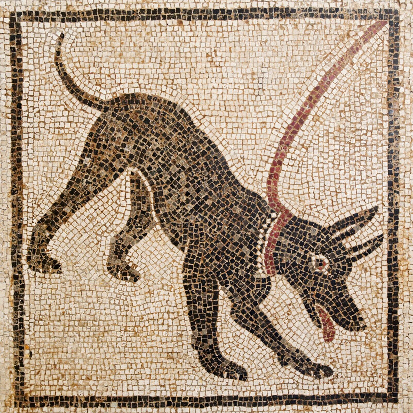 Kolorowa ukazuje rzymską mozaikę zNeapolu. Na kwadratowym jasnym tle przedstawiony jest duży ciemny pies. Pysk ma skierowany wprawy dolny róg kwadratu. Ma cienki, lekko zawinięty do góry ogon, spiczaste uszy, zpyska wystaje czerwony język. Pies ma na szyi obrożę. Przywiązana do niej smycz skierowana jest wprawy górny róg mozaiki.