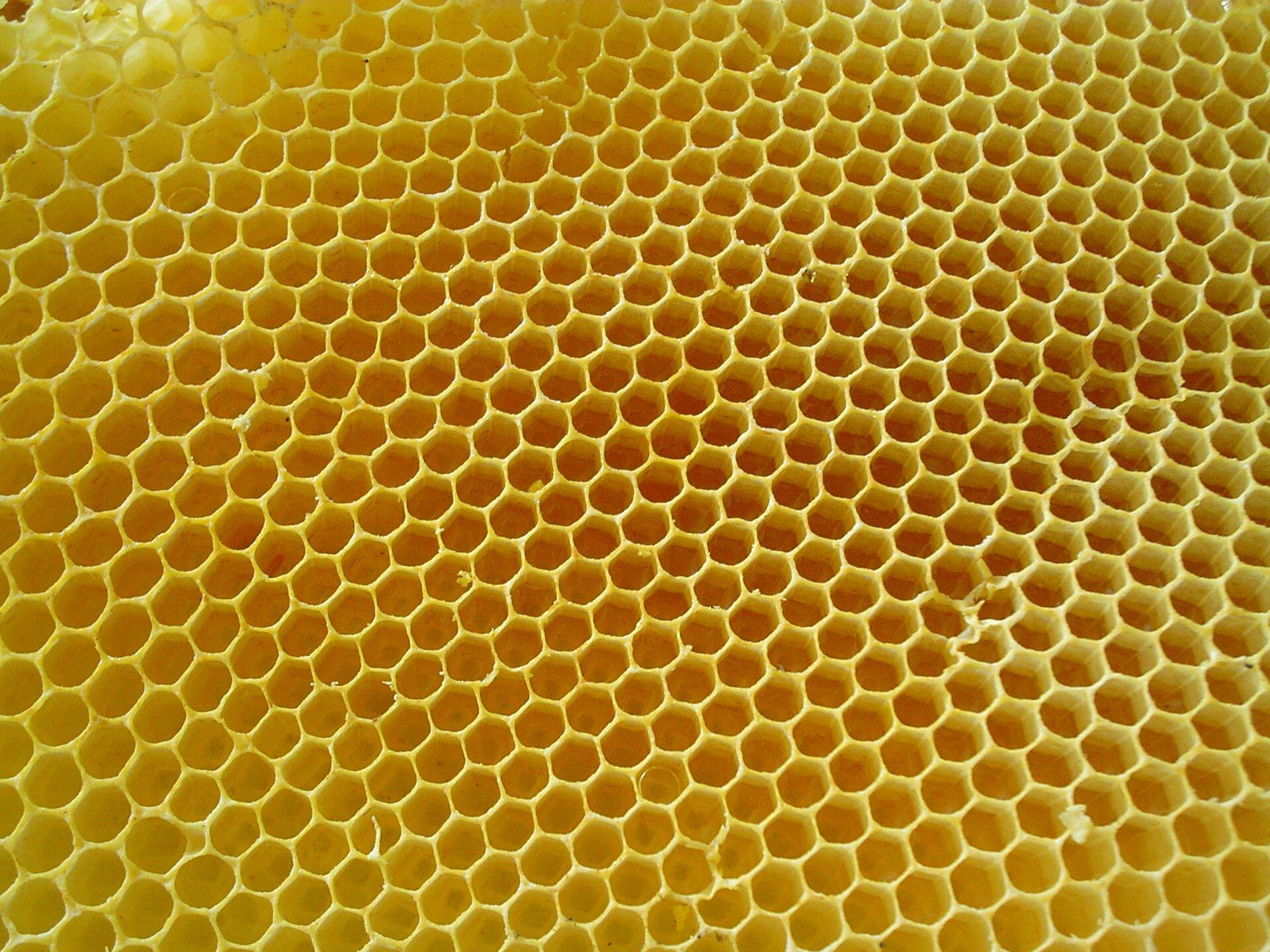 Zdjęcie przedstawia duży plaster miodu. Plaster miodu ma kolor żółty. Cała powierzchnia plastra miodu jest podzielona na przylegające do siebie otworki. Liczne otworki mają kształt sześciokątów. Całość tworzy sieć sześciokątów gęsto ułożonych symetrycznie obok siebie.