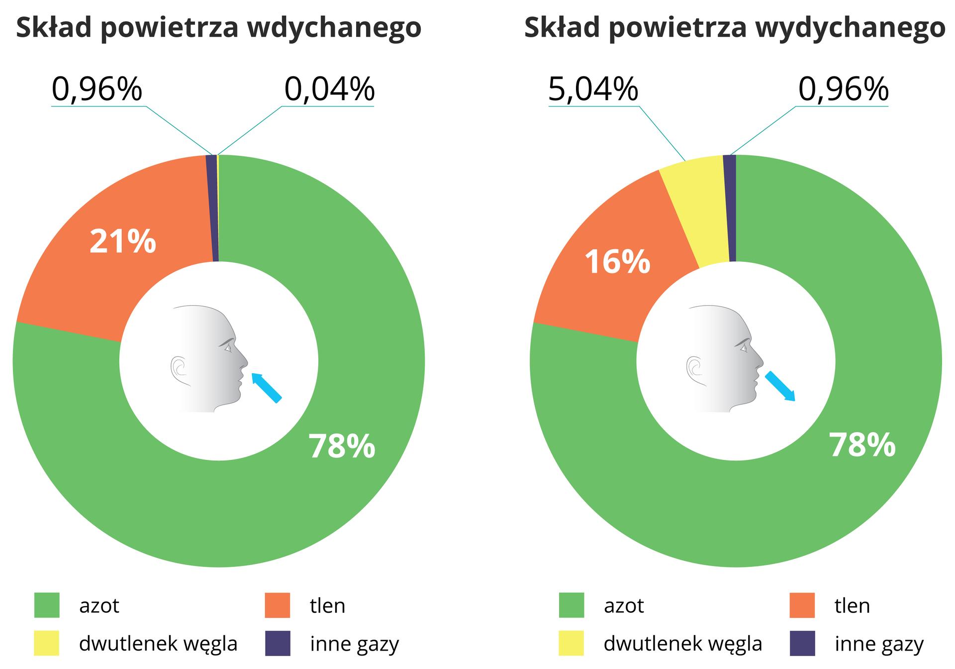 Ilustracja przedstawia dwa diagramy pierścieniowe zsylwetką główki wśrodku. Wobu te same gazy oznaczono tym samym kolorem. Lewy diagram przedstawia skład powietrza wdychanego (błękitna strzałka do główki). Jest wnim 78 procent azotu (zielony), 21 procent tlenu (pomarańczowy) , 97 setnych procenta dwutlenku węgla (żółty) i4 setne procenta innych gazów (granatowy). Prawy diagram przedstawia skład powietrza wydychanego (strzałka od główki). Ilość azotu nie zmieniła się. Tlenu jest 16 procent, dwutlenku węgla pięć icztery setne procenta, innych gazów jest 96 setnych procenta.