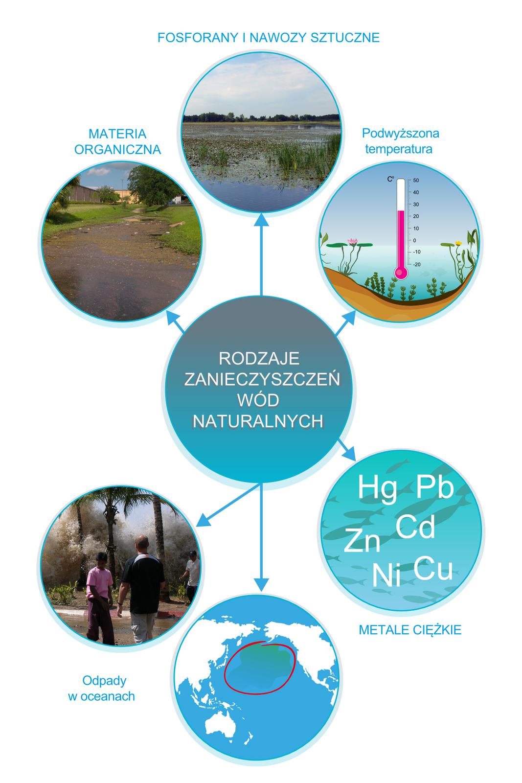 Ilustracja wformie infografiki przedstawia główne rodzaje zanieczyszczeń wód naturalnych. Wcentralnej części planszy znajduje się niebieskie koło zbiałym napisem Rodzaje zanieczyszczeń wód naturalnych od którego odchodzi pięć koncentrycznie rozmieszczonych strzałek prowadzących do pięciu kół za zdjęciami ipodpisem. Licząc od góry wkierunku ruchu wskazówek zegara są to: zdjęcie małego zbiornika wodnego porośniętego roślinnością, rysunek przekroju jeziora zpiktogramem termometru wskazującego podwyższoną temperaturę 35 stopni Celsjusza, symboliczny rysunek głębi morskiej zsylwetkami ryb na tle którego widoczne są symbole pierwiastków ciężkich: Hg, Pb, Cd, Cu, Zn iNi oraz rysunek globu ziemskiego zujęciem Oceanu Spokojnego na którym zaznaczona została wielka plama ropy iinnych zanieczyszczeń.