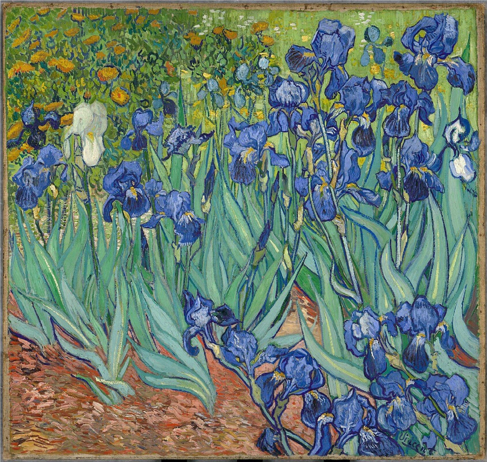 """Ilustracja przedstawia obraz olejny """"Irysy"""" autorstwa Vincenta Van Gogha. Na pierwszym planie kompozycji ukazane zostały wyrastające zczerwono-rudej ziemi niebieskie kwiaty owysmukłych zielono-szarych liściach idługich, wąskich łodygach. Wtle znajduje się ciepłe, zielono-żółte pole słoneczników. Artysta różnicuje plamę barwną. Zarówno tło jak iziemia malowane są przy pomocy techniki puentylistycznej – drobnymi pociągnięciami pędzla, impasto. Zupełnie inaczej traktuje kwiaty – tutaj malarz przyłożył dużą wagę do detalu iodwzorowania natury. Każda roślina jest namalowany zniezwykłą wnikliwością, wręcz czuje się  ich aksamitną delikatność. Powyginane kształty niebieskich płatków stanowią kontrast zokalającymi je podłużnymi liśćmi. Artysta zastosował tutaj kompozycję otwartą – obraz stanowi kadr większego pejzażu, który łatwo jesteśmy wstanie sobie wyobrazić."""