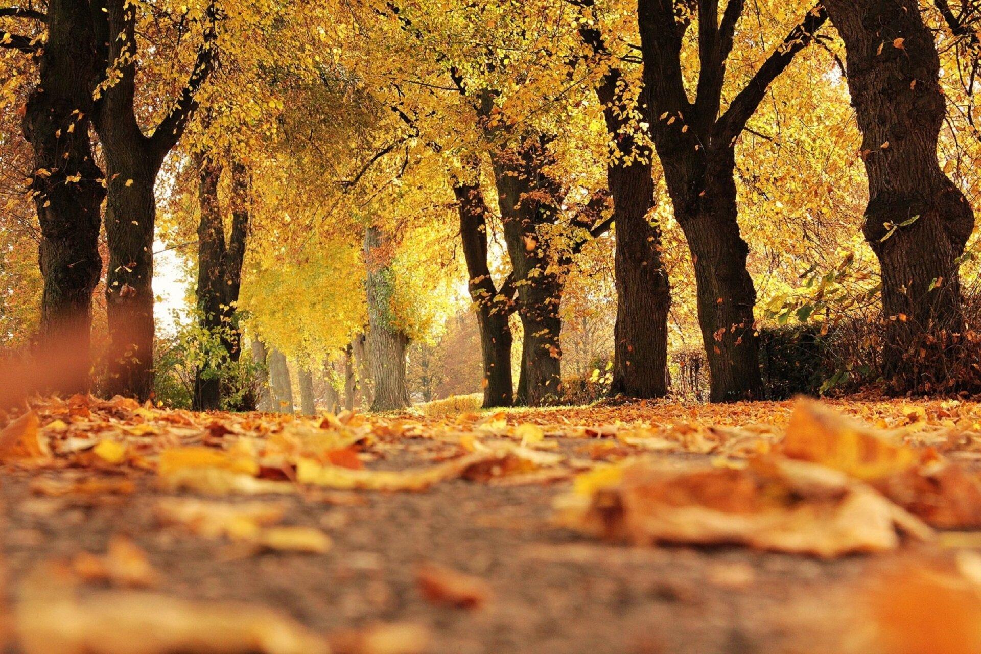 Ilustracja przedstawia fragment parku jesienią. Widoczne są liczne drzewa oraz alejka. Na ścieżce znajdują się pomarańczowe liście, które opadły zdrzew.