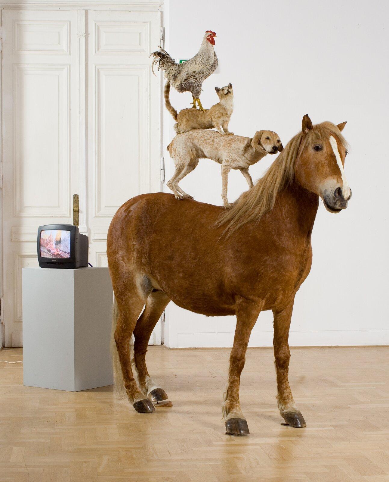 Piramida zwierząt Źródło: Katarzyna Kozyra, Piramida zwierząt, 1993, rzeźba-instalacja: 4 wypreparowane zwierzęta – koń, pies, kot, kogut, Zachęta – Narodowa Galeria Sztuki, Warszawa, licencja: CC BY-SA 3.0.
