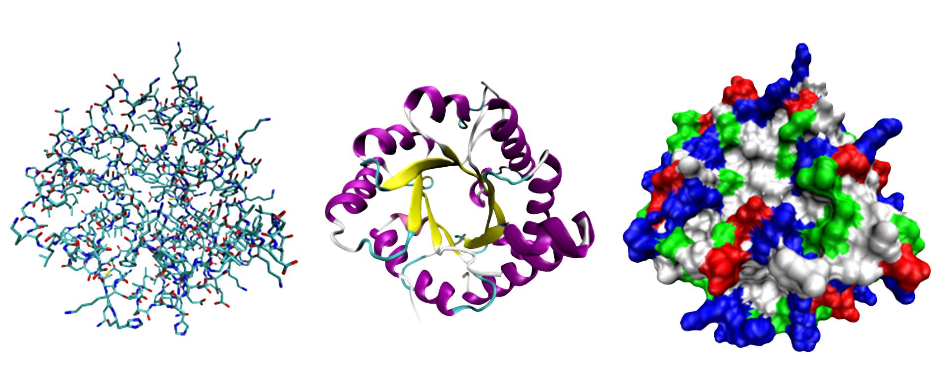Modele różnych struktur białek
