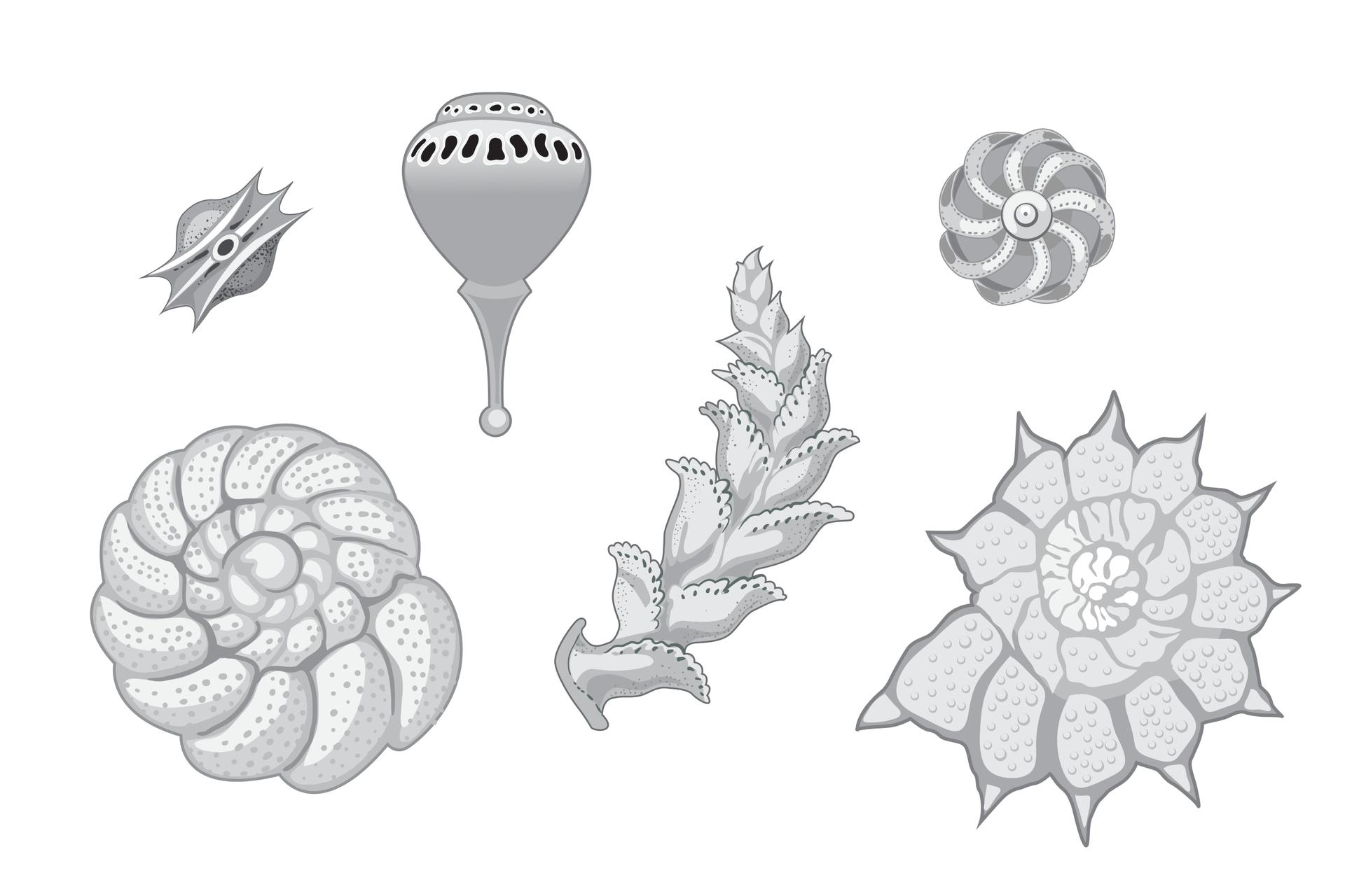 Ilustracja przedstawia sześć pancerzyków otwornic. Są to wapienne szkielety zewnętrzne oróżnej wielkości ikształcie.
