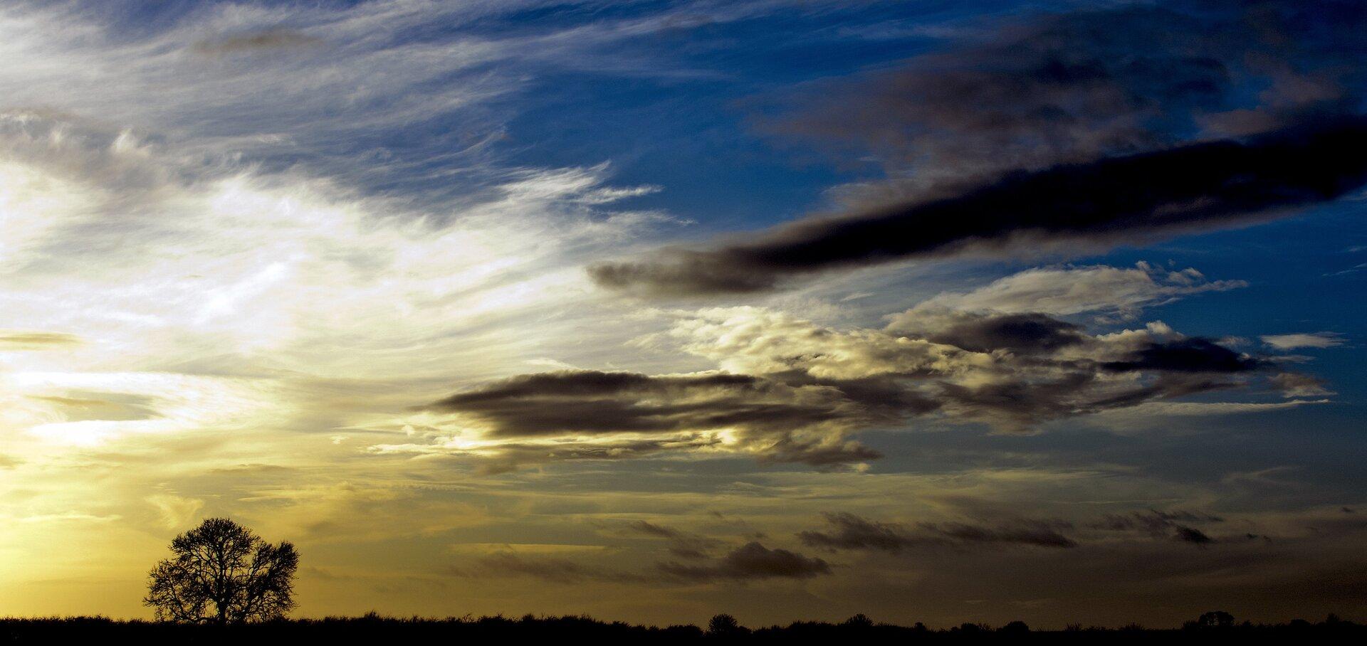 Panoramiczne zdjęcie krajobrazowe, którego głównym tematem jest niebo. Ziemia zajmuje bardzo niewielki obszar wzdłuż dolnej krawędzi kadru ijest przedstawiony wpostaci ciemnej sylwetki. Po lewej stronie na wysokość nie większą niż jedna piąta wysokości sceny nad linię horyzontu wystaje sylwetka samotnego drzewa pozbawionego liści. Niebo wgórnej części kadru ma barwę niebieską, przechodzącą wżółć poranka wlewym dolnym rogu. Prawa strona kadru ciemniejsza. Chmury białe iskłębione pojedyncze ciemne wypełniają większą część sceny.