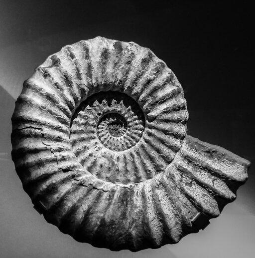Wymieranie gatunków wprzeszłości iwspółcześnie