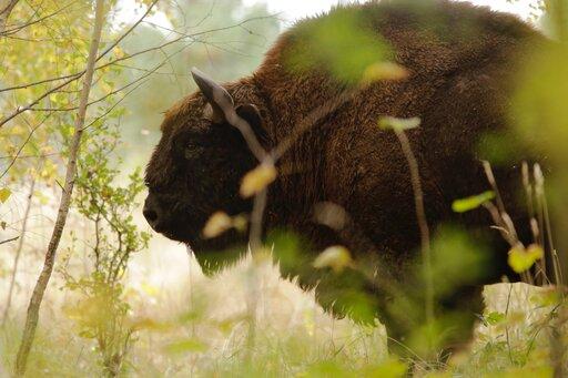 Wartości przyrodnicze ikulturowe wPolsce oraz stan zachowania krajobrazu
