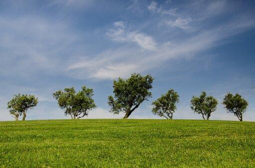 Wspomaganie ekologiczne