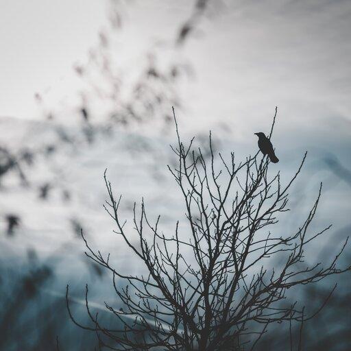 Brutalnie prawdziwa rzeczywistość – <em>Rozdzióbią nas kruki, wrony…</em> Stefana Żeromskiego jako przykład naturalizmu wliteraturze