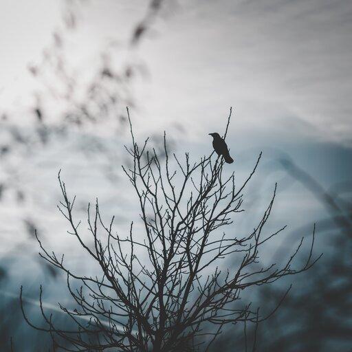 <q>Zza świata szła noc, rozpacz iśmierć…</q> Obraz klęski powstania w<em><cite>Rozdzióbią nas kruki, wrony</cite></em> Stefana Żeromskiego