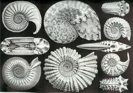 Transgresje iregresje morskie oraz ich wpływ na rozwój świata organicznego