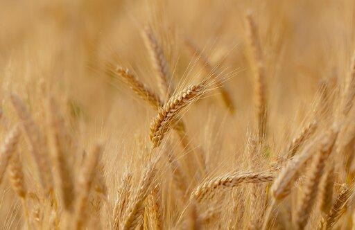 Zmiany udziału areału wybranych roślin uprawnych wPolsce na przestrzeni lat